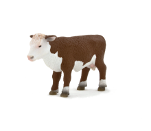 Hereford Calf standing