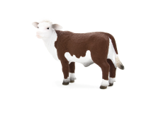 Hereford Calf looking